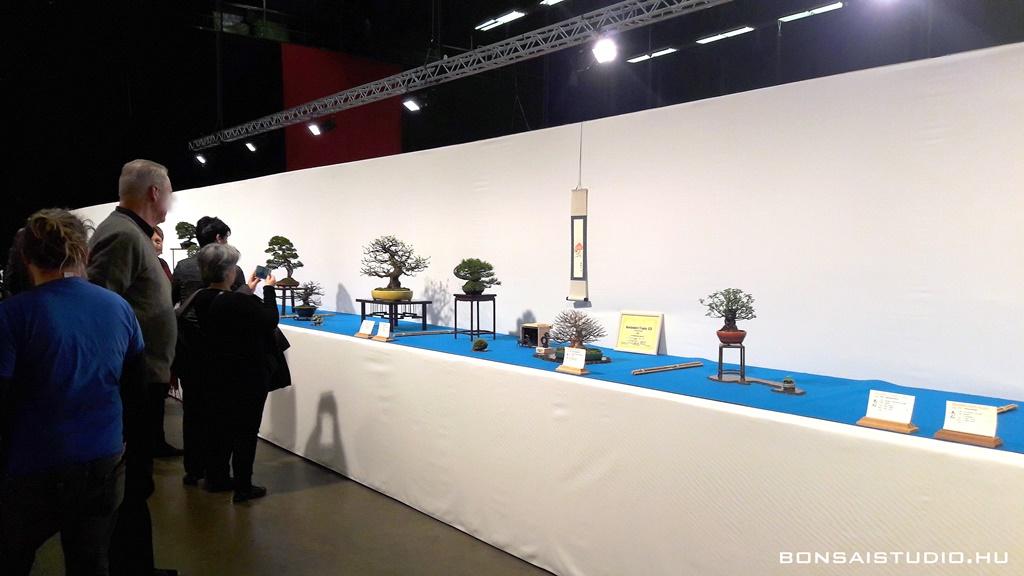 xix. noelanders trophy nemzetközi bonsai és suiseki kiállítás a bonsai association belgium szervezésében