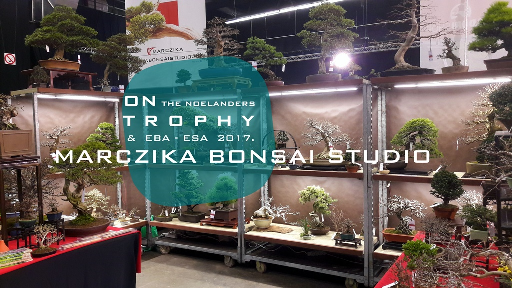noelanders trophy sales area with the marczika bonsai studio stand