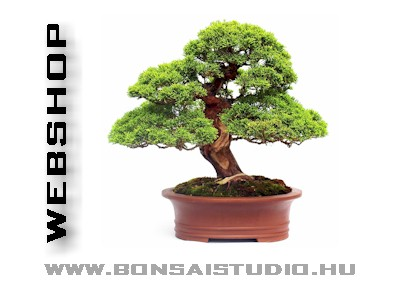 web bonsai